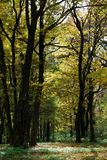 Autumn forest path Royalty Free Stock Photography