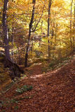 Autumn forest path Royalty Free Stock Images