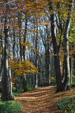 Autumn forest path. Small forest path through a autumn colored trees Royalty Free Stock Image