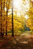Autumn forest path. Sun shining through autumn forest illuminated path Stock Photos