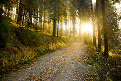 Autumn forest path. Beautiful autumn forest mountain path at sunset Royalty Free Stock Photo