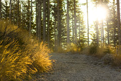 Autumn forest path. Beautiful autumn forest mountain path at sunrise Stock Photography