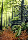 Autumn forest path. With rock Stock Photos