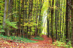 Autumn forest path. Path in the autumn forest Royalty Free Stock Photos