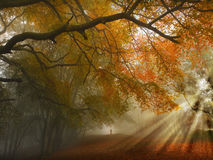 Autumn forest path. Autumnal Autumn forest foggy path with ghostly figure