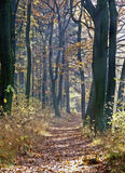 Autumn in forest. With path Stock Image