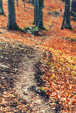 Autumn forest path. Soil covered in leaves Stock Photos