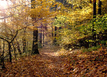 Autumn Forest. Autumn in forest with path Stock Photography
