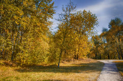 Autumn in the forest. Path in the autumn forest Stock Photo