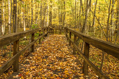 Free Autumn Forest Path Stock Images - 61479334