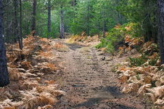 Autumn forest path. A path in a pine forest during fall in Sicily, Italy stock images