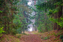 Autumn Forest Path. Beautiful autumn forest mountain path at sunset Stock Image