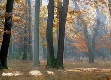Autumn Forest. With path and bench Stock Image