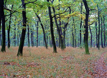 Autumn Forest. With path and bench Royalty Free Stock Photo