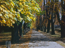 Autumn Forest. With path and bench Royalty Free Stock Image
