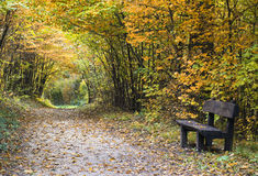Autumn forest path with wood bench Royalty Free Stock Images