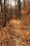 Autumn forest path. Between black leafless trees Royalty Free Stock Photos