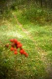 Autumn forest path with a bunch of red berries in the foreground. Royalty Free Stock Photos