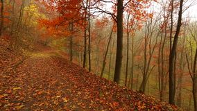 Autumn forest path stock video footage