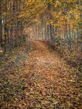Autumn forest path Stock Image