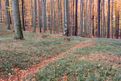 Autumn forest path covered with leaves Royalty Free Stock Images