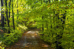 Autumn forest. Path during the day Stock Images