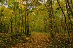 Autumn forest path with fallen leafs. In Bois de Boulonge park, Paris, France Stock Photography