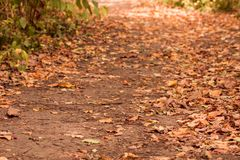 Autumn forest path with fallen leaves Stock Images