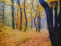 Autumn colorful forest with path Stock Image