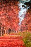 Autumn forest path. With falling red leaves Stock Photo