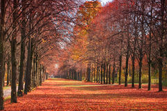 Autumn forest path. With falling red leaves