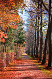 Autumn forest path. With falling red leaves Stock Images