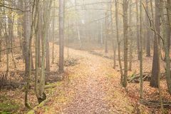 Autumn forest and path at foggy day Royalty Free Stock Photography