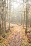 Autumn forest and path at foggy day Royalty Free Stock Photo