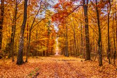 Autumn on forest path I Stock Photography