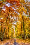 Autumn on forest path II Stock Photography