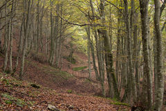 Autumn forest path. Image of autumn forest path in the marche region, Italy Royalty Free Stock Photography