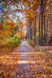 Autumn on forest path IX Stock Photos