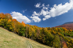 Autumn forest and path in the meadow. With beautiful blue cloudy sky Stock Photography