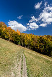 Autumn forest and path in the meadow. With beautiful blue cloudy sky Stock Photo