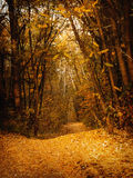 Autumn forest. The path in the autumn mystical forest Stock Photo