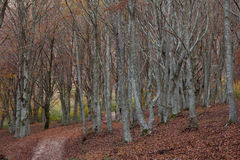 Autumn forest path in the natural reserve of San Vicino Mountain Royalty Free Stock Image