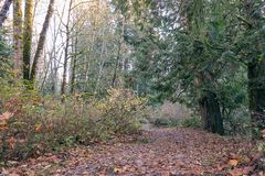 Autumn forest path. Red fallen leaf path through autumn woods Royalty Free Stock Photo