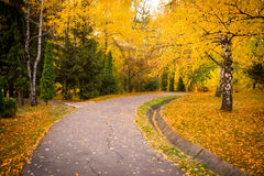Autumn forest path Stock Images
