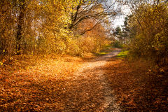 Autumn forest path. Road with falling yellow leaves Stock Photography