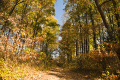 Autumn forest path, South Africa Stock Image