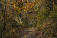 Autumn forest path in sunny day Stock Images