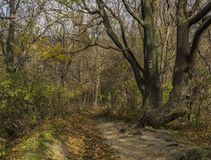 Autumn forest path in sunny day Royalty Free Stock Photo