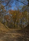 Autumn forest path in sunny day Stock Photo