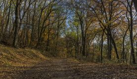 Autumn forest path in sunny day Royalty Free Stock Image